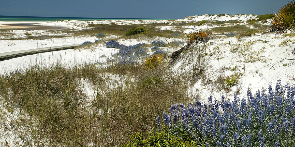 Wildflowers - South Walton, Florida